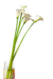 Calla flowers in vase. Calla lily flowers in vase isolated Stock Photos