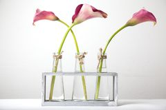 Calla flowers in vases. Stock Images