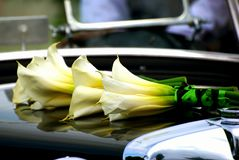 Calla Lelies op de Elegante Kap van de Auto Royalty-vrije Stock Foto's