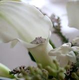Calla-Lilie und Verlobungsring Stockfotografie