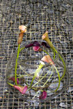 Calla-Lilie (Zantedeschia aethiopica) Lizenzfreie Stockbilder