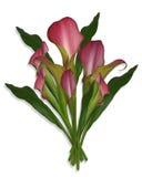 Calla-Lilien-Blumenstrauß der Blumen Lizenzfreie Stockbilder