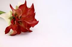 Calla-Lilienblumenstrauß Lizenzfreie Stockfotos