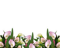 Calla Lilies Border Stock Photo