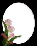 Calla Lilies Border on black oval frame. Image and illustration composition of pink calla lilies for wedding, birthday, party invitation, border or black oval Royalty Free Stock Images