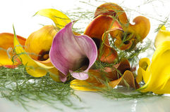 Calla lilies and ferns on table Stock Photos