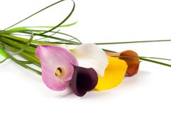 Calla Lilies flowers bouquet. Isolated on white background Royalty Free Stock Images
