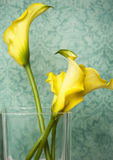 Calla lilies in glass vase Stock Photos