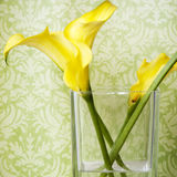 Calla lilies in glass vase Royalty Free Stock Photos