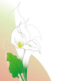 Calla lilies. Calla lily flowers illustration background Royalty Free Stock Images