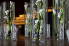 Calla lilies in a vase Royalty Free Stock Image