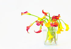 Calla lilies in vase Royalty Free Stock Images