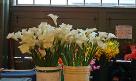 Calla lillies for sale royalty free stock photo