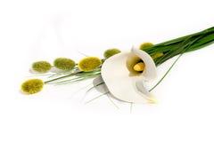 Calla Lilly auf Weiß mit Weiden Lizenzfreies Stockfoto