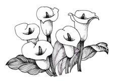 Calla lilly bloemen, zwart-witte illustratieachtergrond vector illustratie