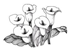 Calla lilly floral, black and white illustration background Royalty Free Stock Photo