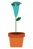 Calla lilly flower icon. Flat design calla lilly flower in pot icon  illustration Royalty Free Stock Image