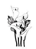 Calla lilly mit Blumen, Schwarzweißabbildungshintergrund Stockbild