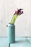 Calla lily. In can on blue table Stock Images