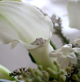 Calla Lily and Engagement Ring Stock Photography