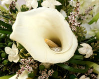 Calla Lily and Engagement Ring Stock Photos