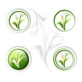 Calla Lily Flower Icon Set Immagine Stock