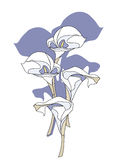 Calla Lily Flowers. Is hand drawn original artwork. The vector file is in AI-EPS8 format Royalty Free Stock Image