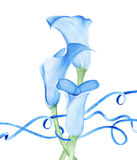 Calla Lily Flowers and Blue Ribbons. Fresh Flowers. Watercolor drawing. Flowers Illustration Stock Photography