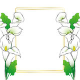 Calla lily flowers card Stock Photos