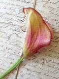 Calla lily on old letter Stock Images