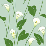 Calla lily pattern. Seamless pattern with white calla lily flowers  and green leaves Stock Image