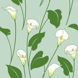 Calla lily pattern Stock Image