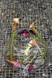 Calla-lily (Zantedeschia aethiopica) Royalty Free Stock Images