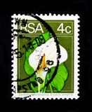 Calla lily Zantedeschia ethiopica, Definitives Flora and Fauna serie, circa 1974. MOSCOW, RUSSIA - OCTOBER 1, 2017: A stamp printed in South Africa shows Calla Royalty Free Stock Images