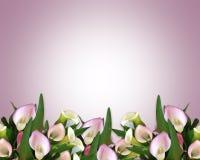 Calla mauve de Grens van Lelies Stock Afbeelding