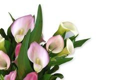 Calla ontwerp van de Hoek van Lelies het roze royalty-vrije illustratie