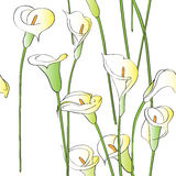 Calla pattern Royalty Free Stock Image
