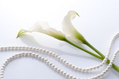Calla and pearls. Calla and white pearls on white background Royalty Free Stock Images