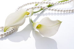 Calla and pearls. Close-up of Calla and white pearls on white background Royalty Free Stock Photography