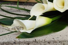 Calla Wedding Rings. Calla Lily with silver bride and groom wedding bands Stock Image