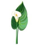 Callablad och blomma royaltyfri illustrationer