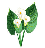 Callablommor och sidor royaltyfri illustrationer