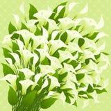 Callas. Fundo floral. ilustração do vetor