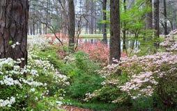 Callaway-Garten-Naturlehrpfad-Kiefern-Berg Georgia lizenzfreies stockbild