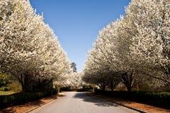 Calle alineada árbol imagenes de archivo