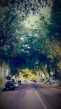 Calle alineada árbol Foto de archivo