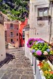 Calle alineada flor fotografía de archivo libre de regalías