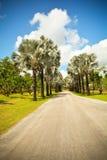 Calle alineada palma Imágenes de archivo libres de regalías