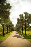 Calle alineada palma Imagenes de archivo