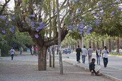 Calle Awassa de la ciudad Fotos de archivo libres de regalías